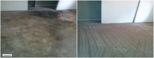 carpet cleaner service nyc