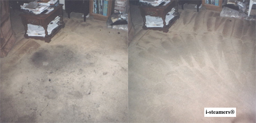 carpet cleaning service nyc